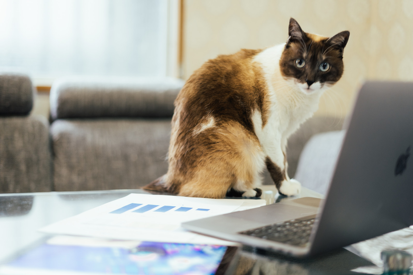 ノートパソコンのそばに可愛いネコ